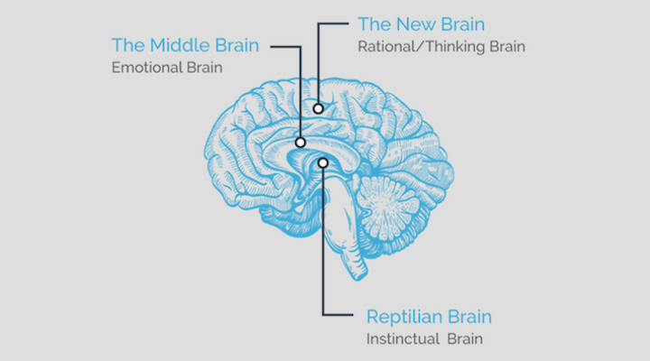 Are you marketing to all 3 parts of your users' brain?