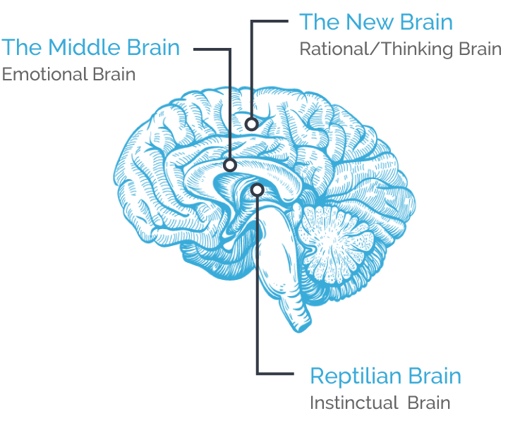 The 3 Of The Brain Diagram With Parts Block And Schematic Diagrams