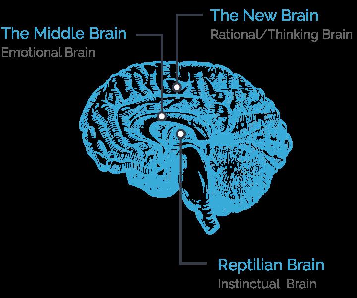 hellonextstep-brain-diagram